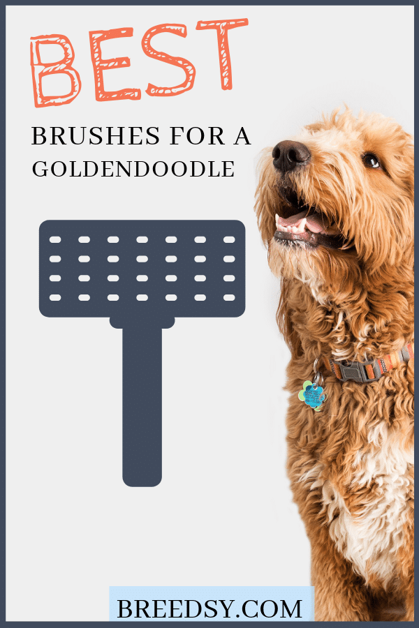 best dog brush for a goldendoodle